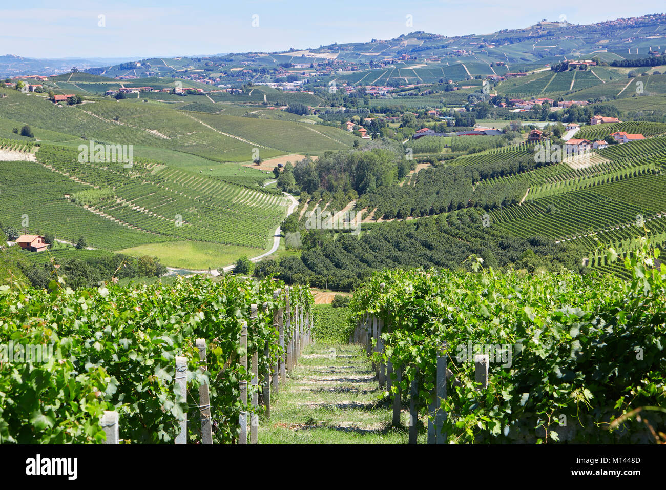 Green countryside with vineyards and trees in Piedmont, Italy - Stock Image