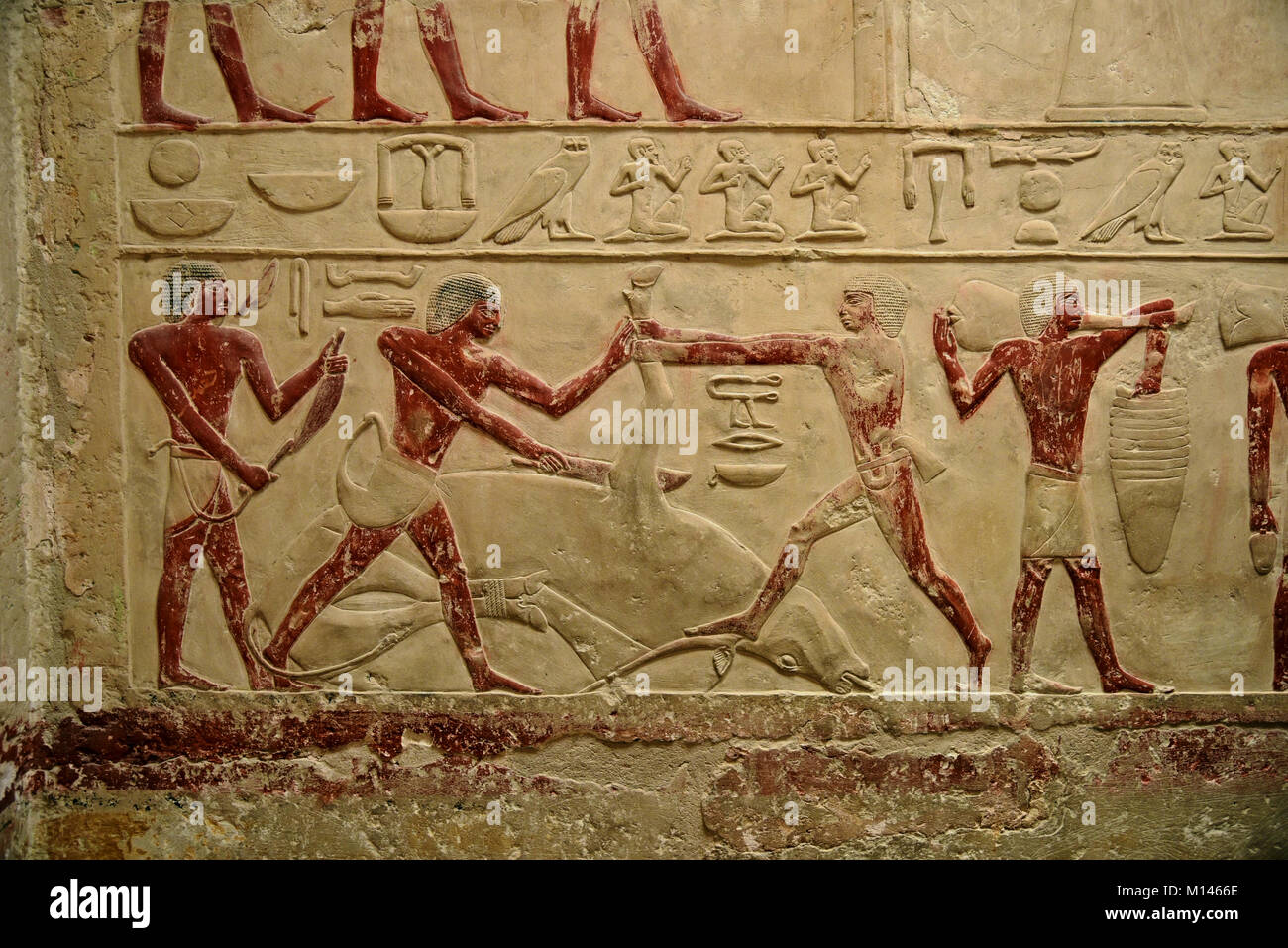 Ancient Egyptian hieroglyphic wall murals depicting lifestyle and