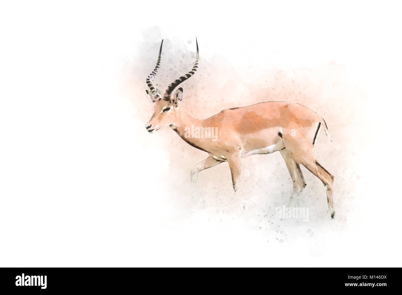 Digitally enhanced image of a side view of a male  impala (Aepyceros melampus). Photographed in Africa, Tanzania, - Stock Image