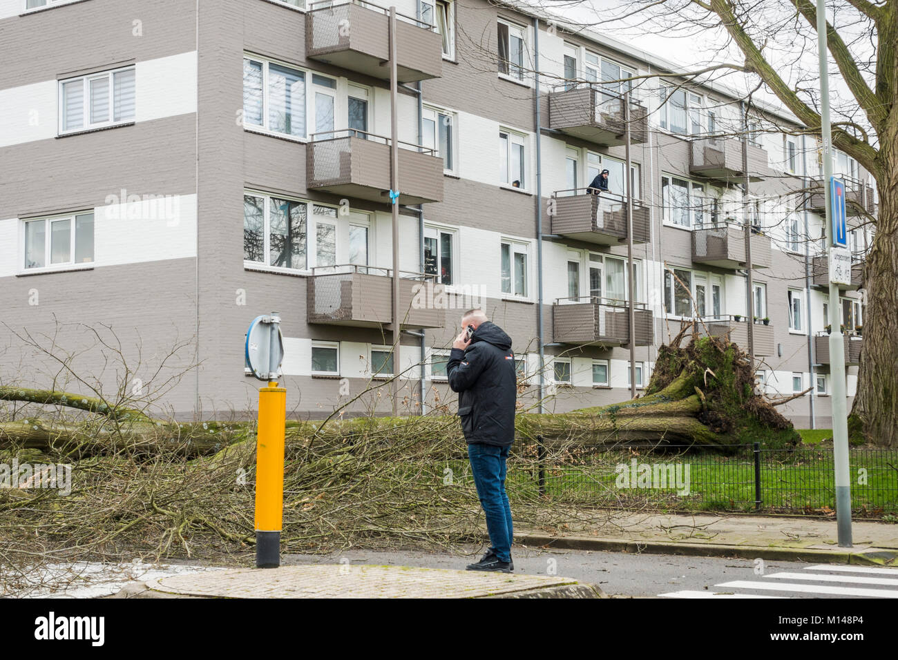 After heavy storm fallen tree blocking road, Sittard, Limburg, Netherlands. Stock Photo