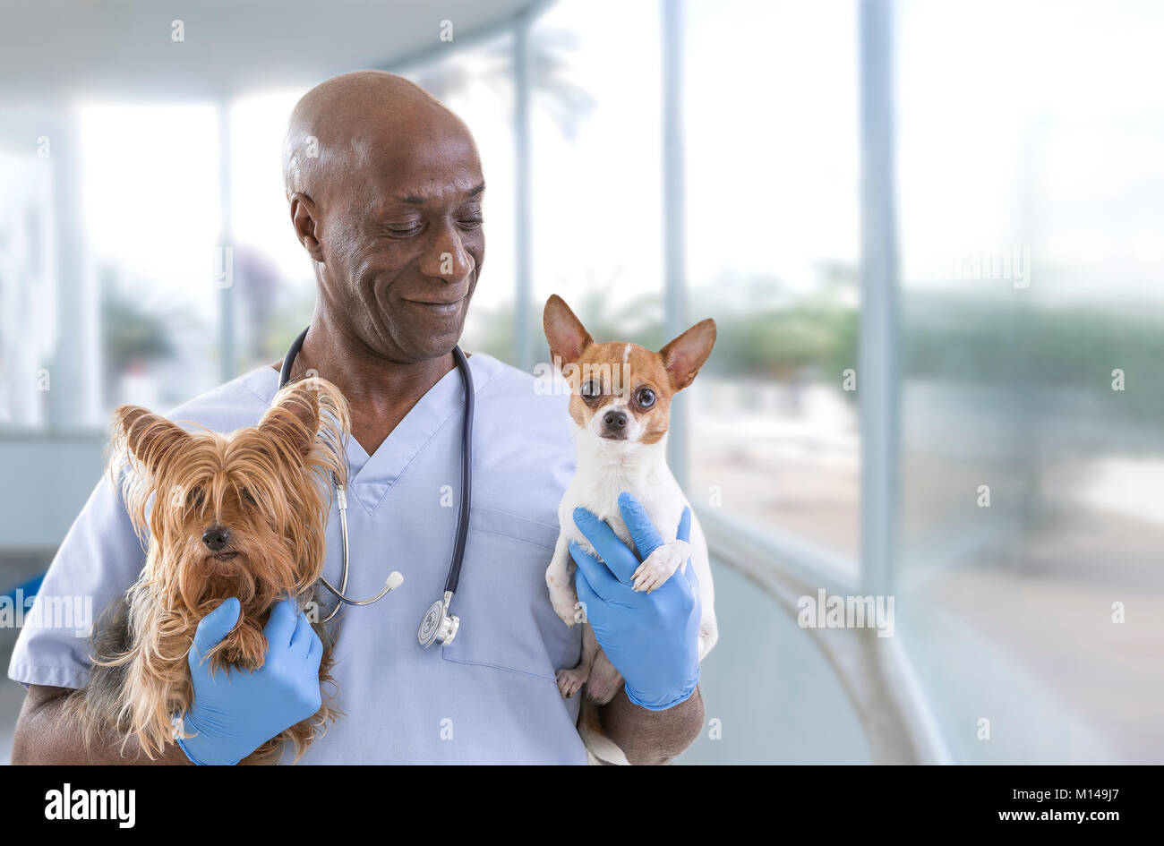 Veterinarian and cute pets on a luxery pet hospital background - Stock Image