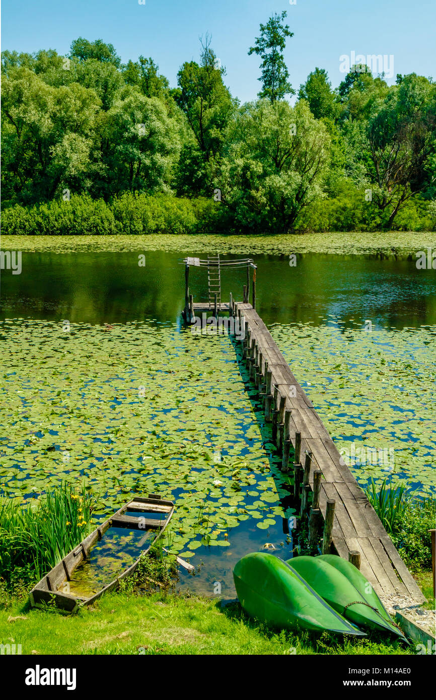 Jetty with broken wooden boat surrounded by lily pads on the river Sava oxbow lake near Lonjsko Polje nature park - Stock Image