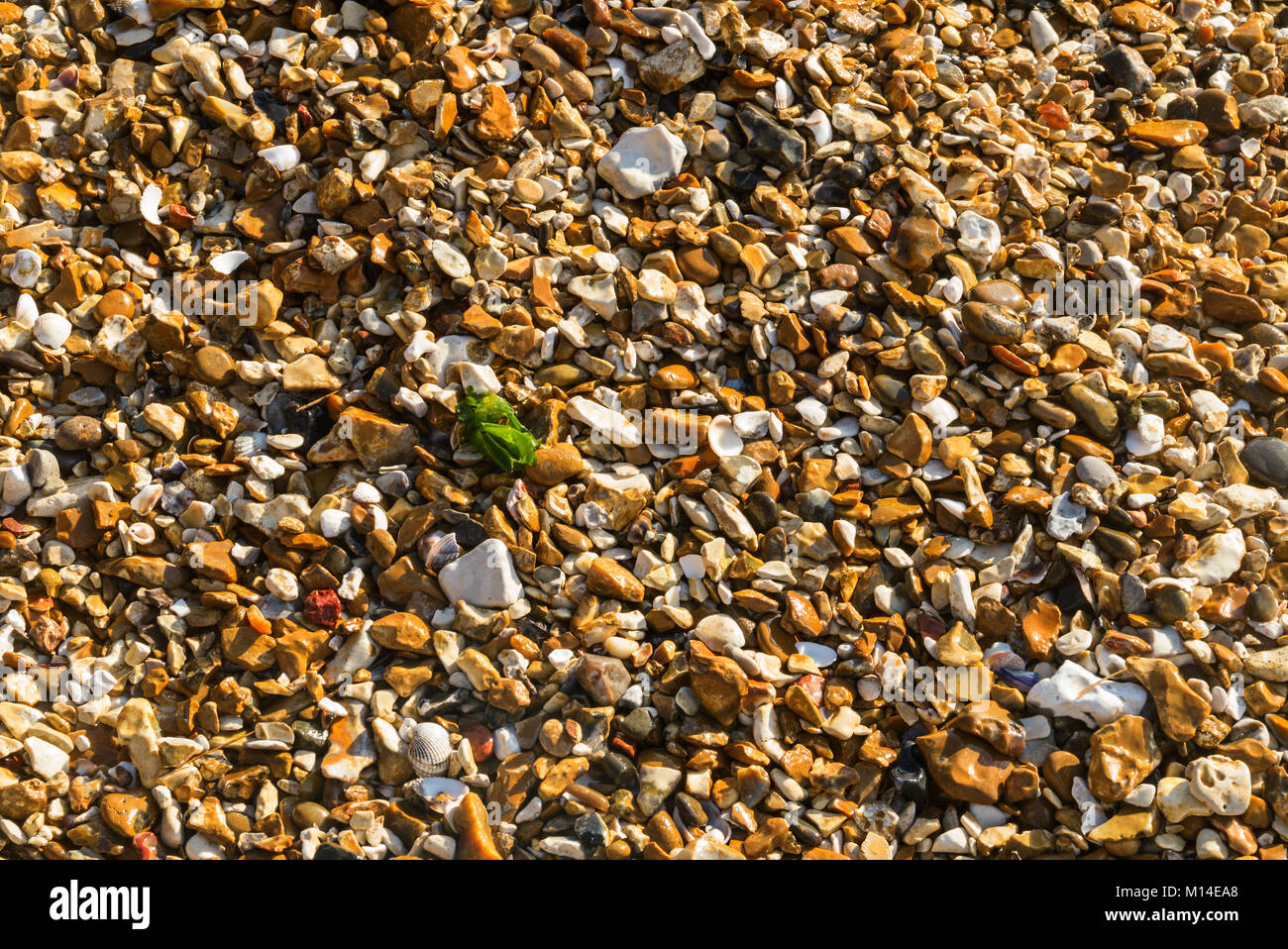Shingle beach at Meon Shore on the Solent at Titchfield, Hampshire, UK - Stock Image