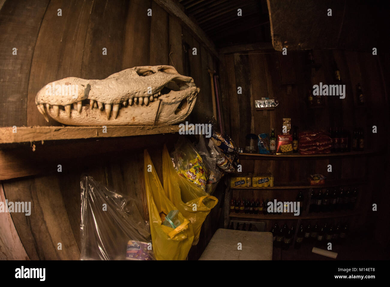 The skull of a black caiman (Melanosuchus niger) decorates a small convenience store in the Amazon basin. Stock Photo
