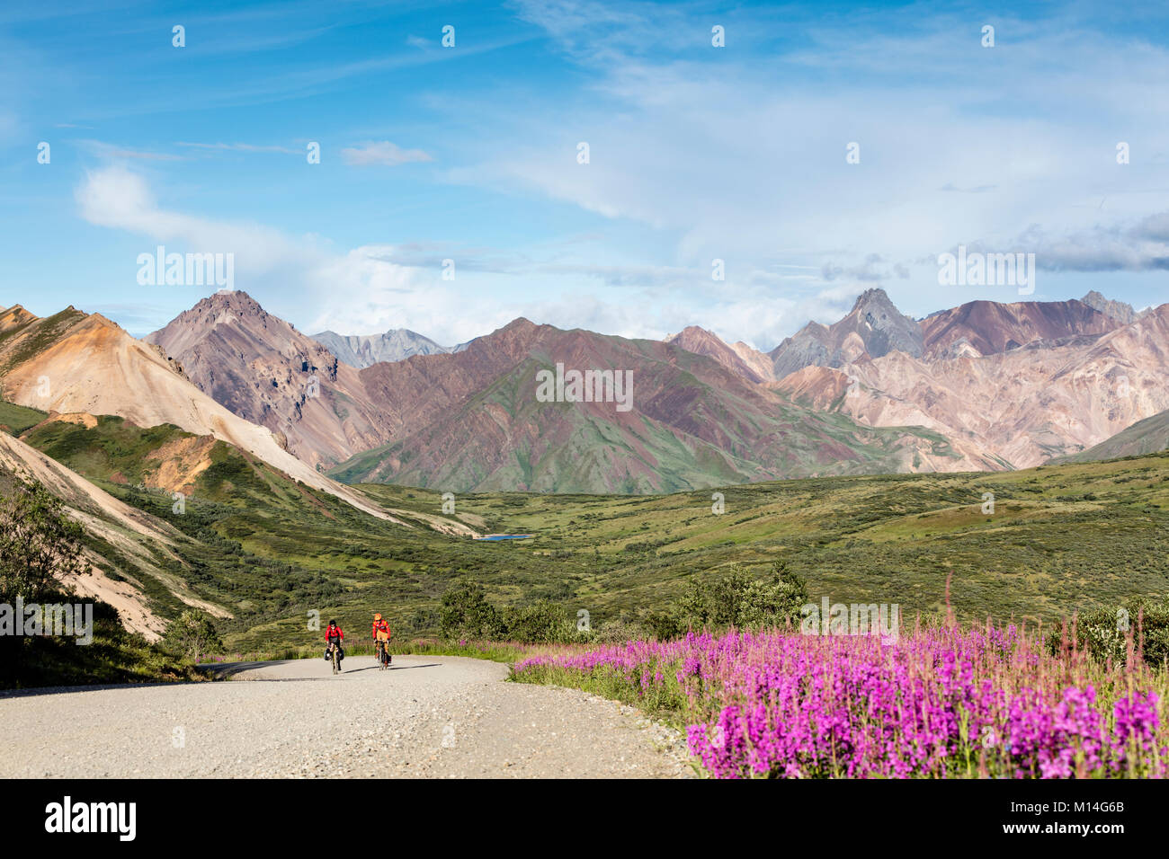 Bicyclists ascend to the summit of Sable Pass in Denali National Park in Southcentral Alaska. - Stock Image