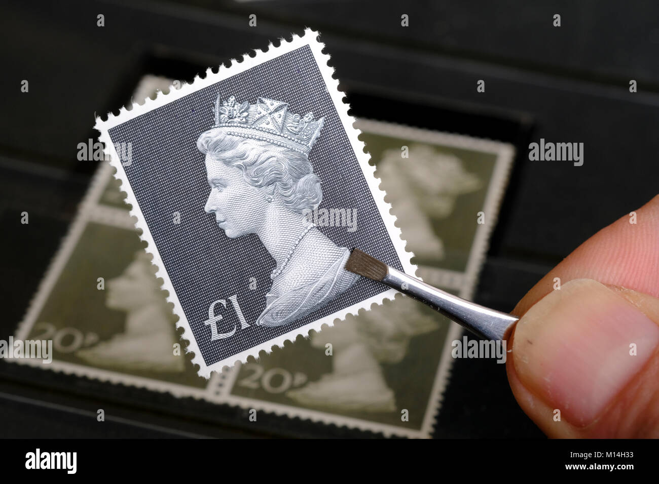 Vintage £1 stamp being held by stamp collector - Stock Image