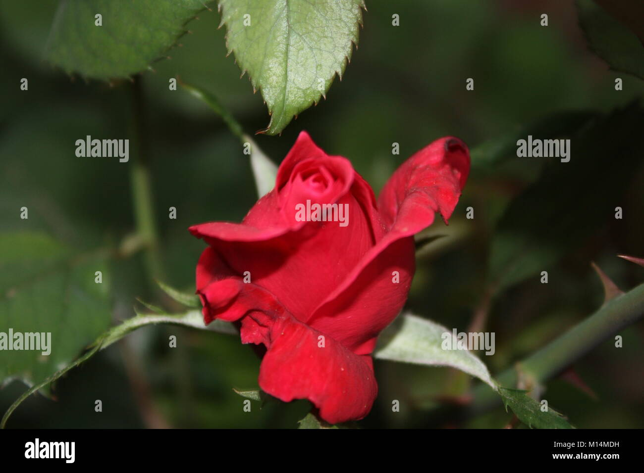 Beautiful Pictures Of Flowers And Greenery Taken Around Where I Live