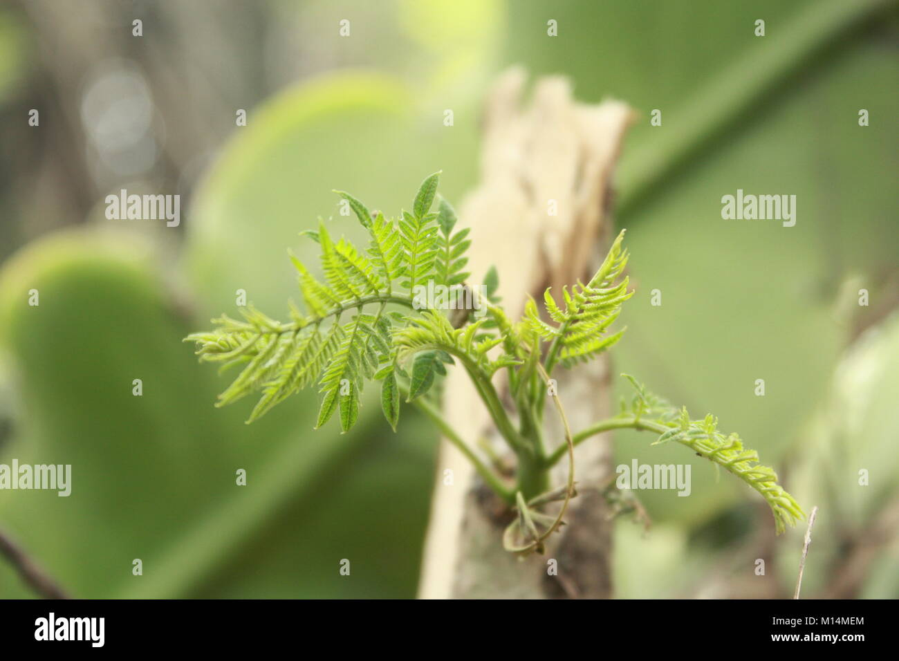 Beautiful pictures of Flowers and greenery taken around where I live. Nature is full of beauty! I love taking these Stock Photo