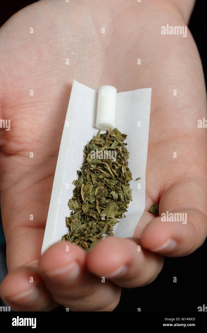 palm with prepared joint of marijuana on black background - Stock Image