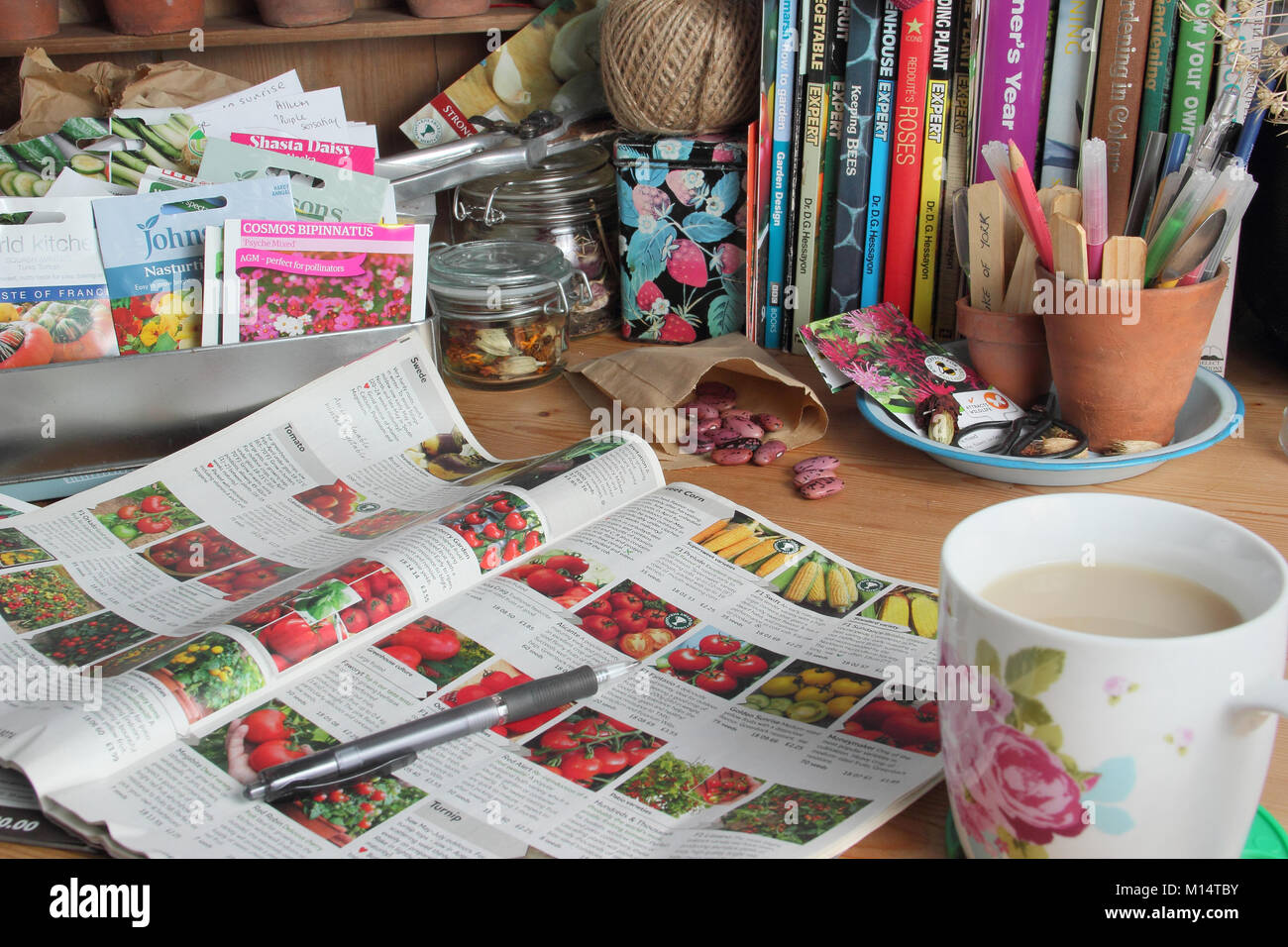 Organising seed packets and ordering seeds from a catalogue for the new planting season, in an English garden room - Stock Image