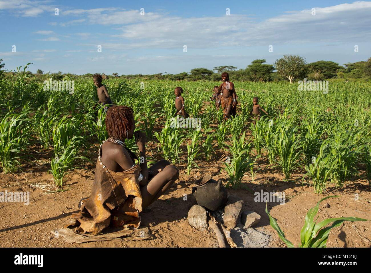 Ethiopia, Lower Omo Valley listed as World Heritage by UNESCO, Hamer tribe, Sorgo is the basis of food - Stock Image