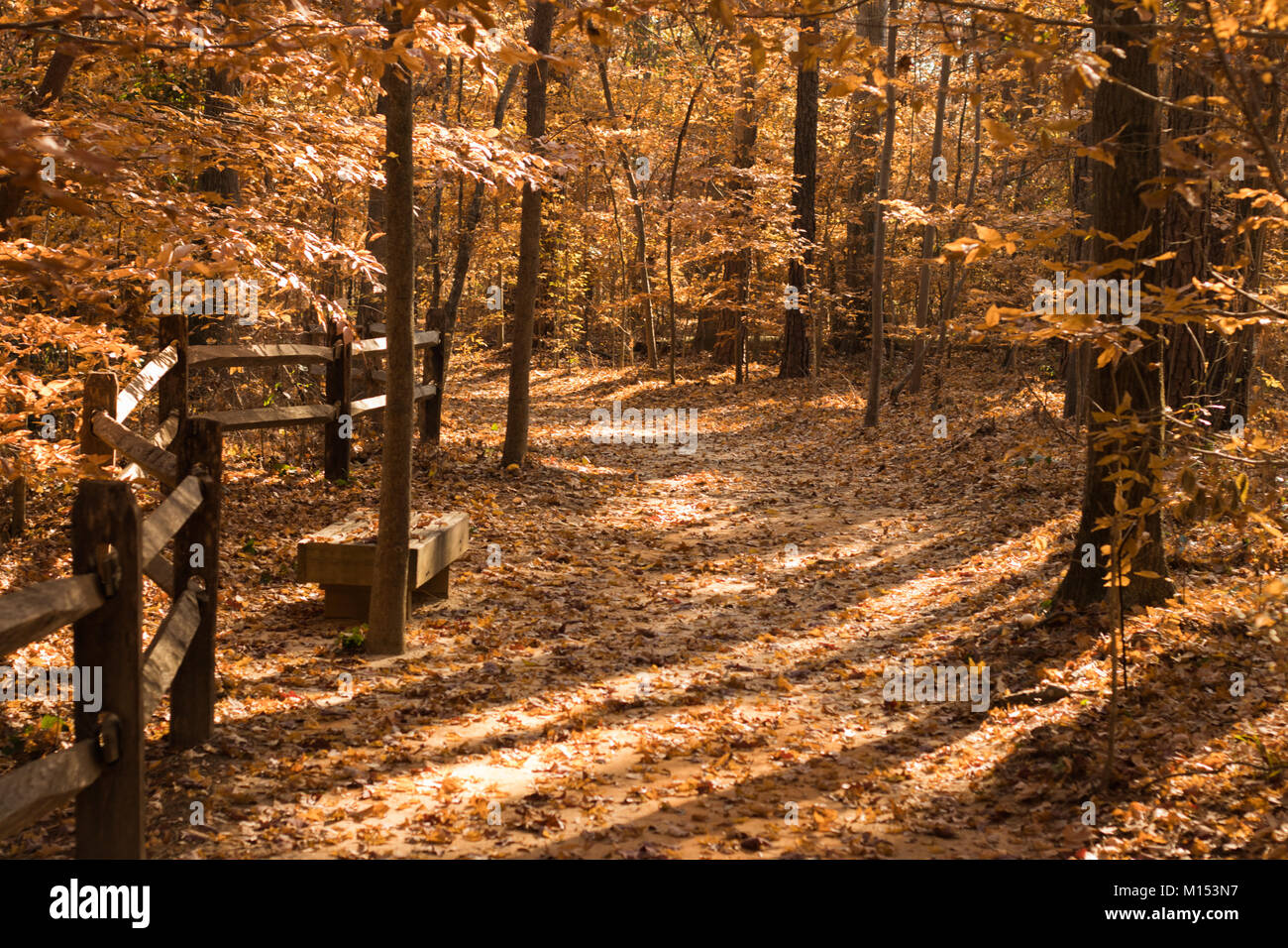 Pathway with Fall Colors in Cape Fear Botanical Garden Stock Photo ...
