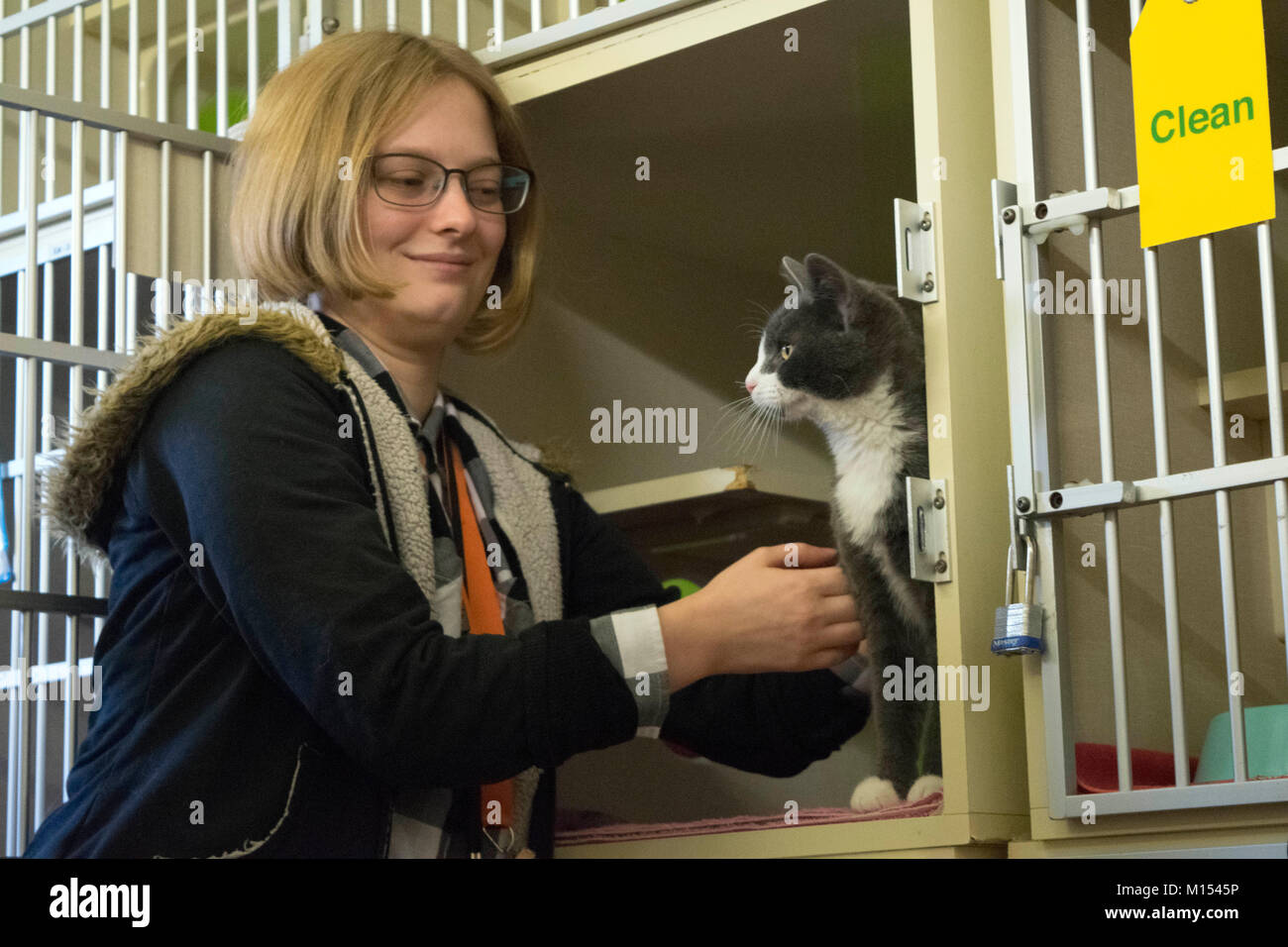 A volunteer at the animal shelter pets a kitten that is up for adoption. - Stock Image