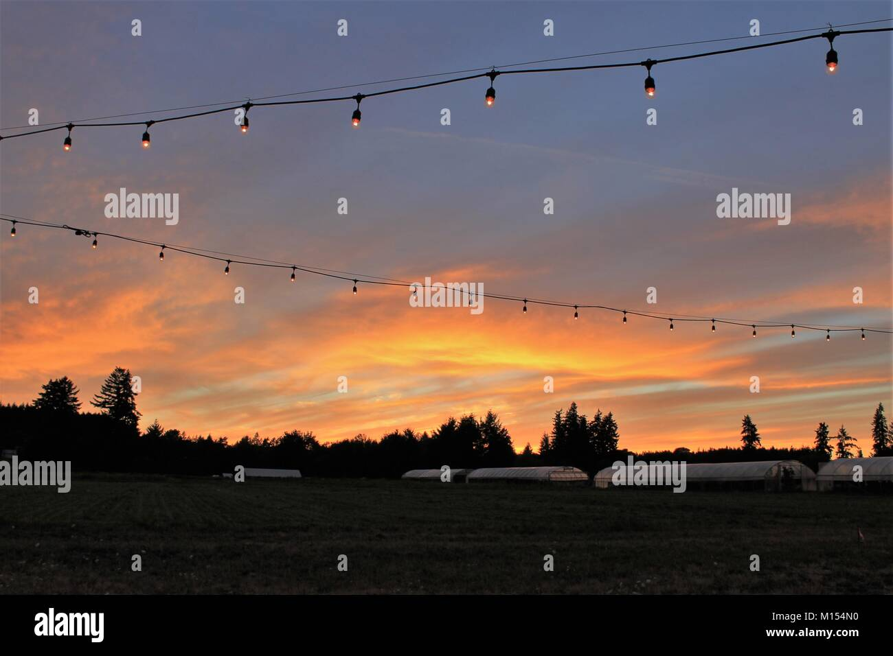 string of lights against a sunset backdrop of farm with greenhouses in background - Stock Image