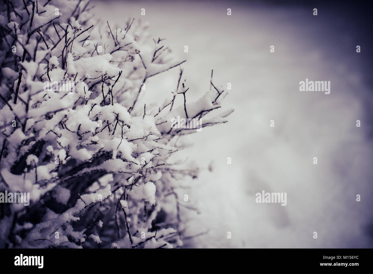 Fresh Falling Snow on Outdoor Bush detail in Forest with Dark Shadows framing image - Stock Image