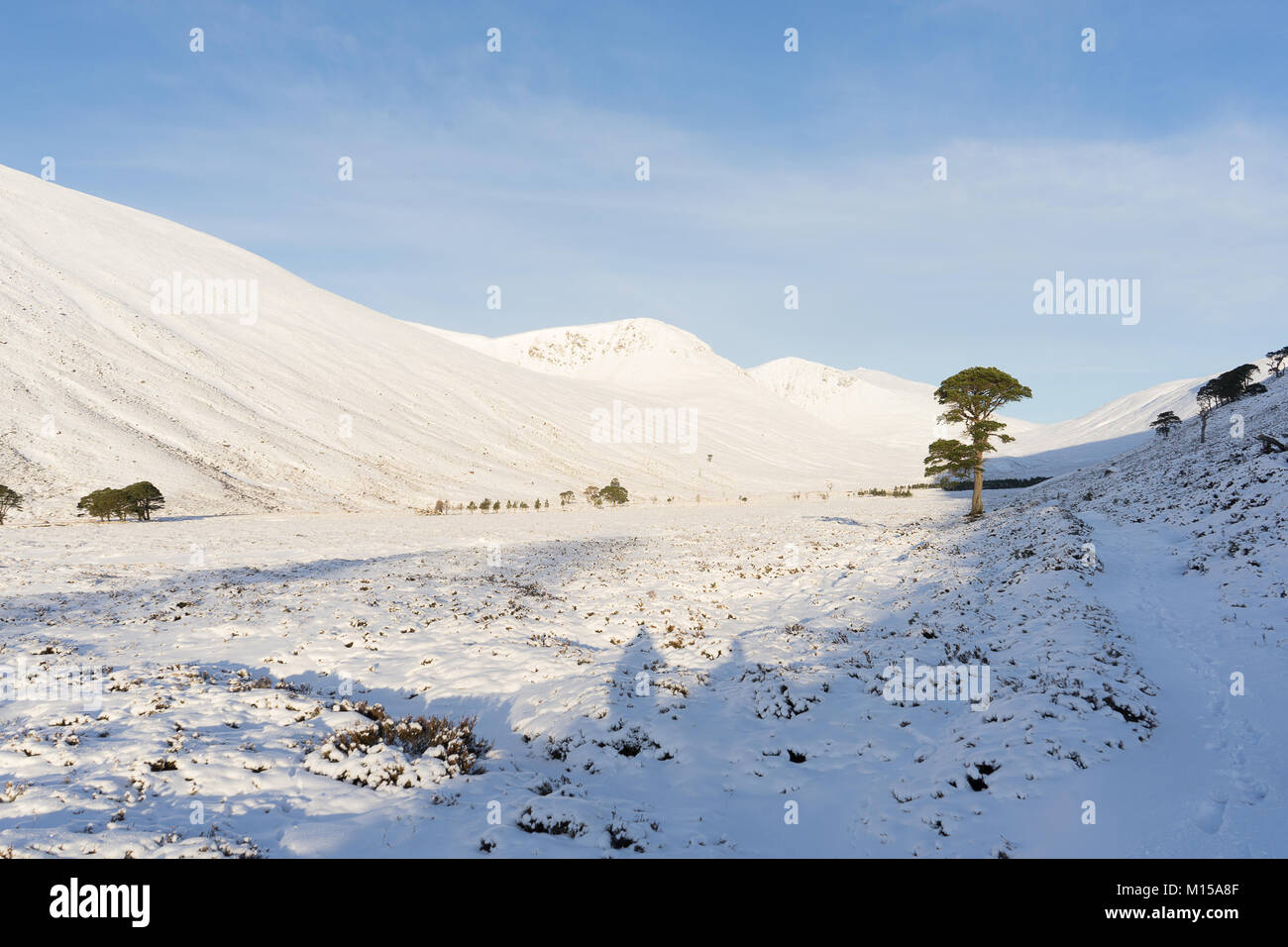 Beinn Mheadhoin, Winter in the Cairngorms - Stock Image