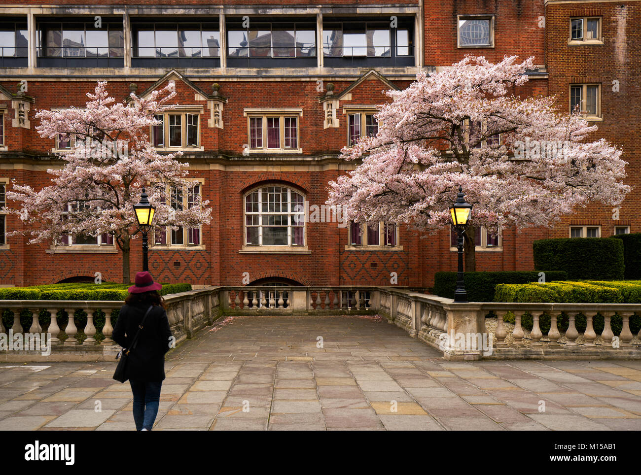 London, England - April 8, 2016: Girl looking at Cherry Blossom Trees in the Royal Albert Hall in London, England Stock Photo