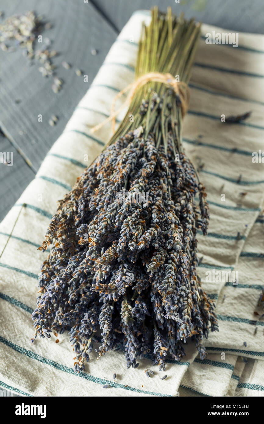 Organic Purple Dry Lavender in a Bundle Stock Photo