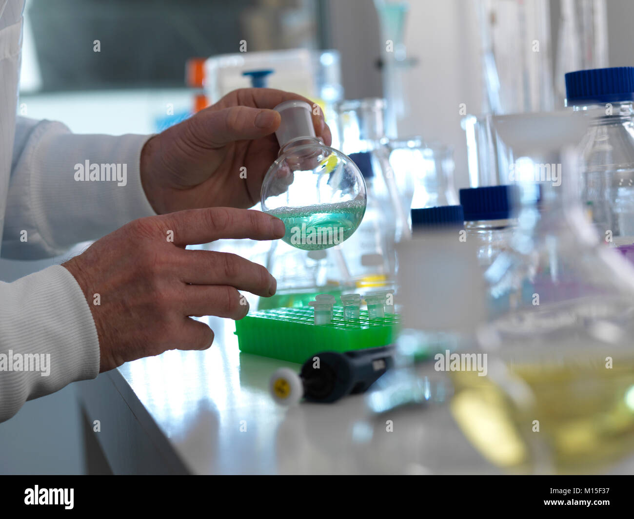 MODEL RELEASED. Biotechnology experiment. Scientist preparing a chemical formula in a laboratory flask during a - Stock Image