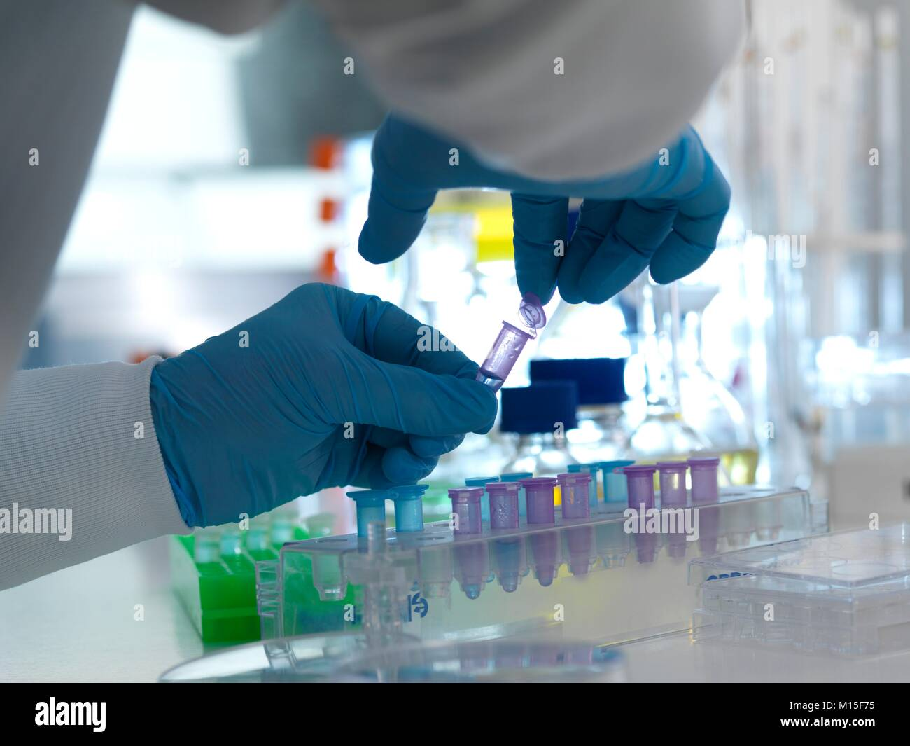MODEL RELEASED. Biomedical research. Scientist closing the lid of a vial ready for testing in a laboratory. - Stock Image