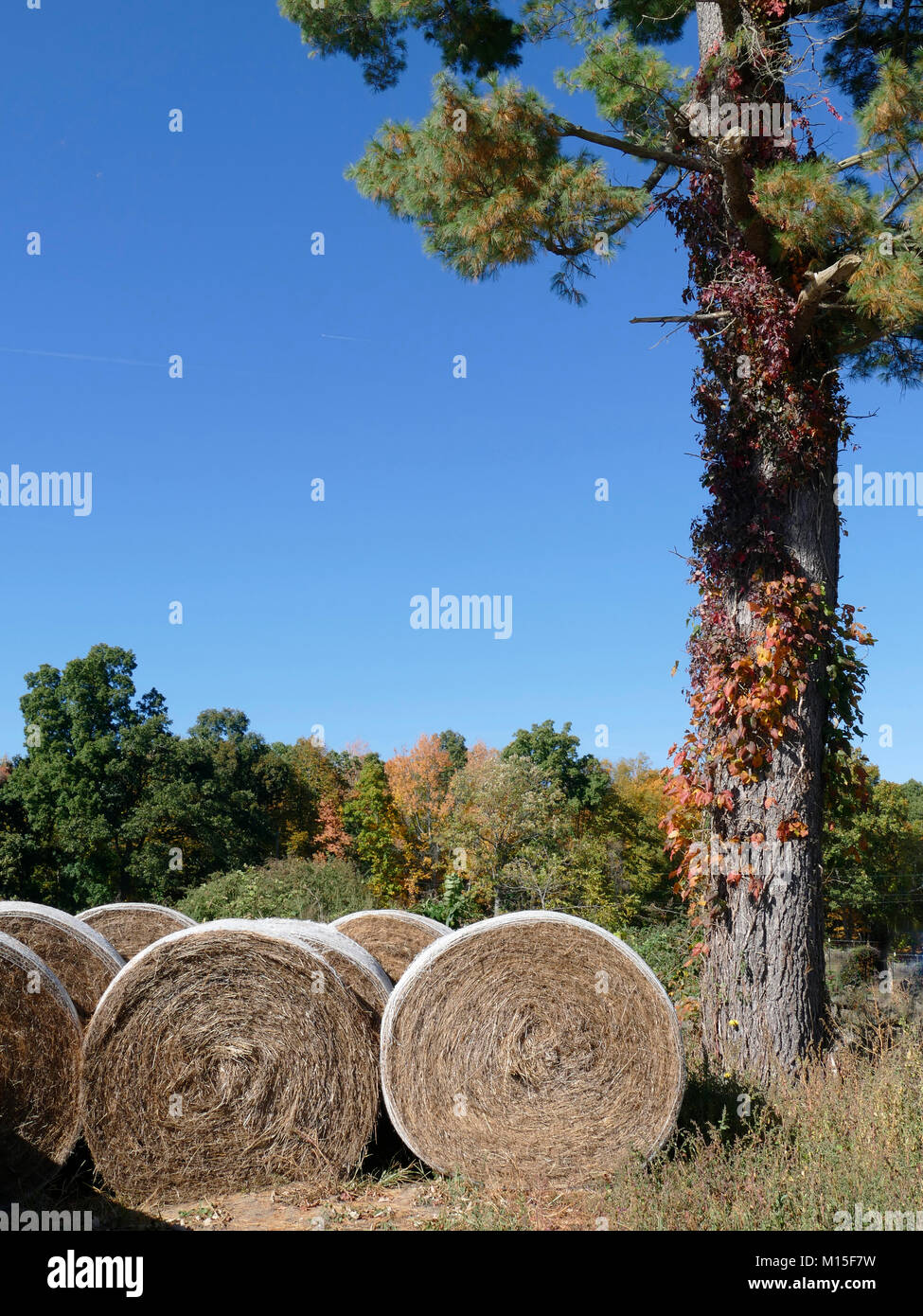 Rolled-up Hay Outside next to a Tree Stock Photo