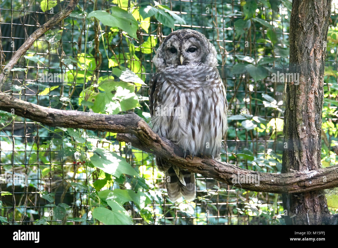 Wise Owl Sitting on Tree Branch Stock Photo