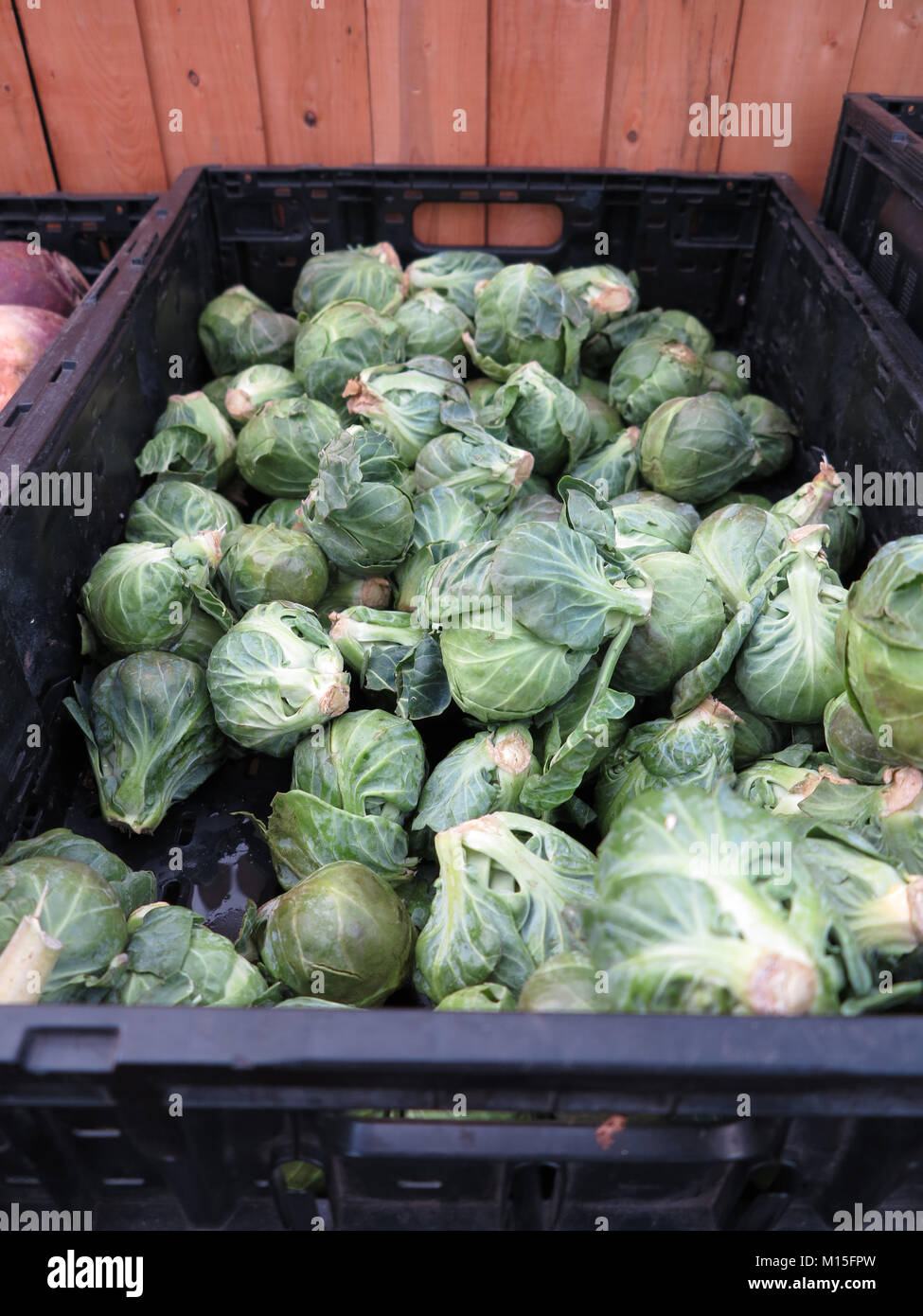 Brussel Sprouts in Basket at Farmer's Market - Stock Image