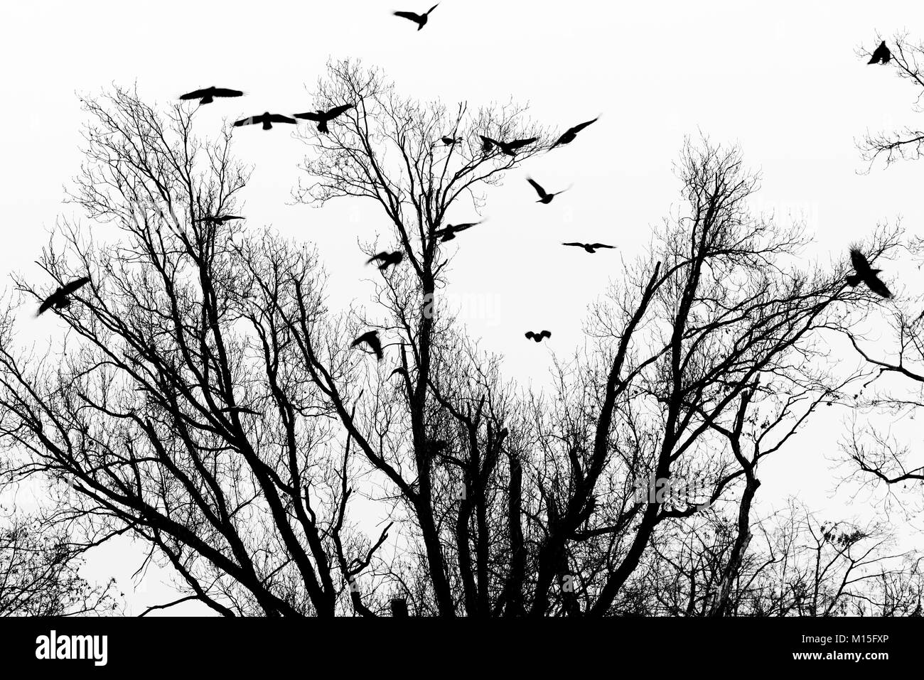 Birds taking flight from the branches of a tree - Stock Image
