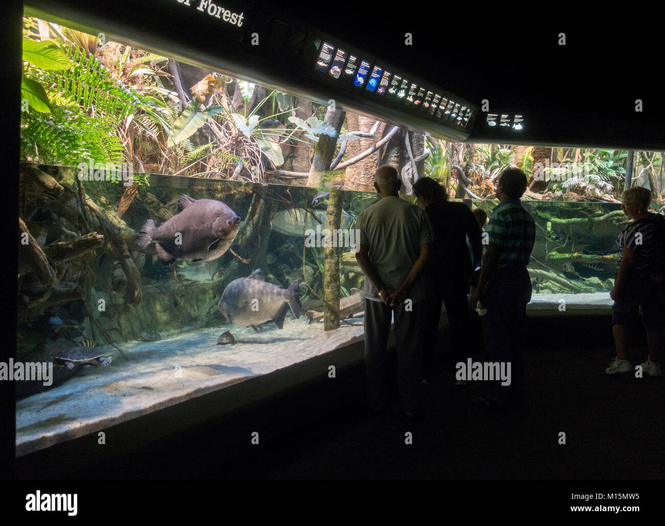 General view inside the National Aquarium, Baltimore, Maryland, United States. - Stock Image