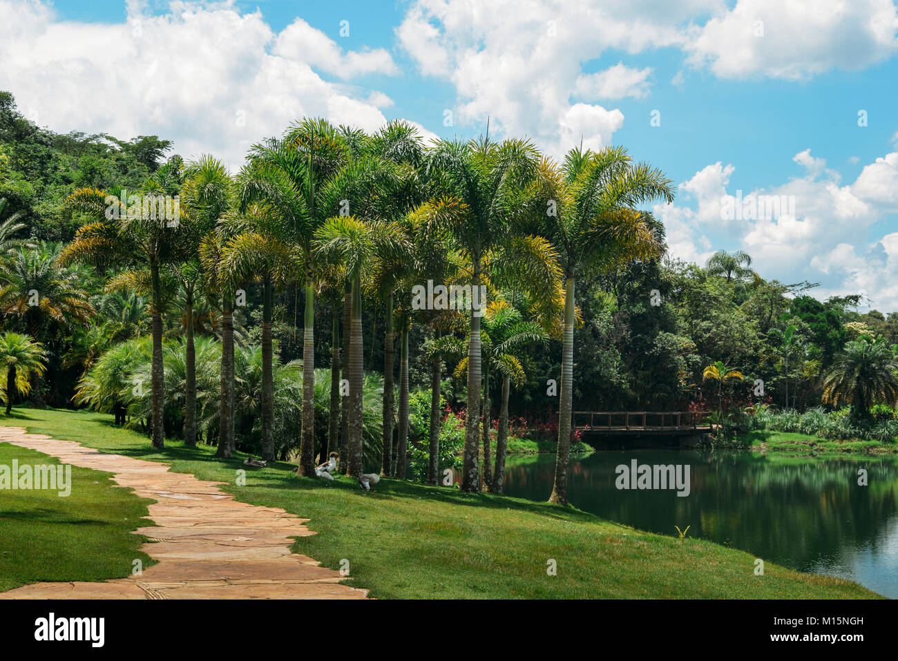 Palm trees next to a lake at a park in Brazil - Stock Image
