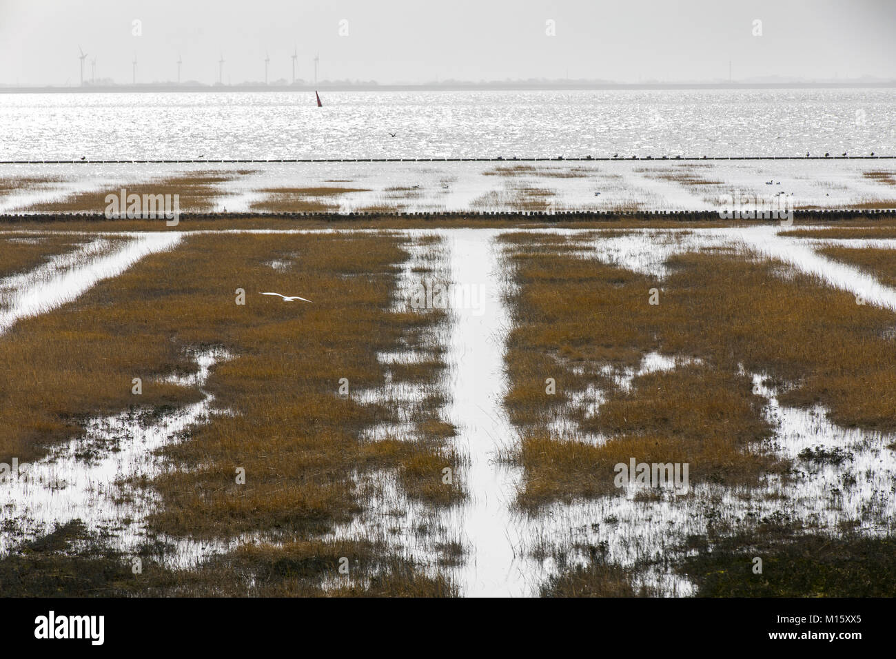 The East Frisian North Sea island Norderney, winter, salt marshes on the Wadden Sea side, Germany Stock Photo