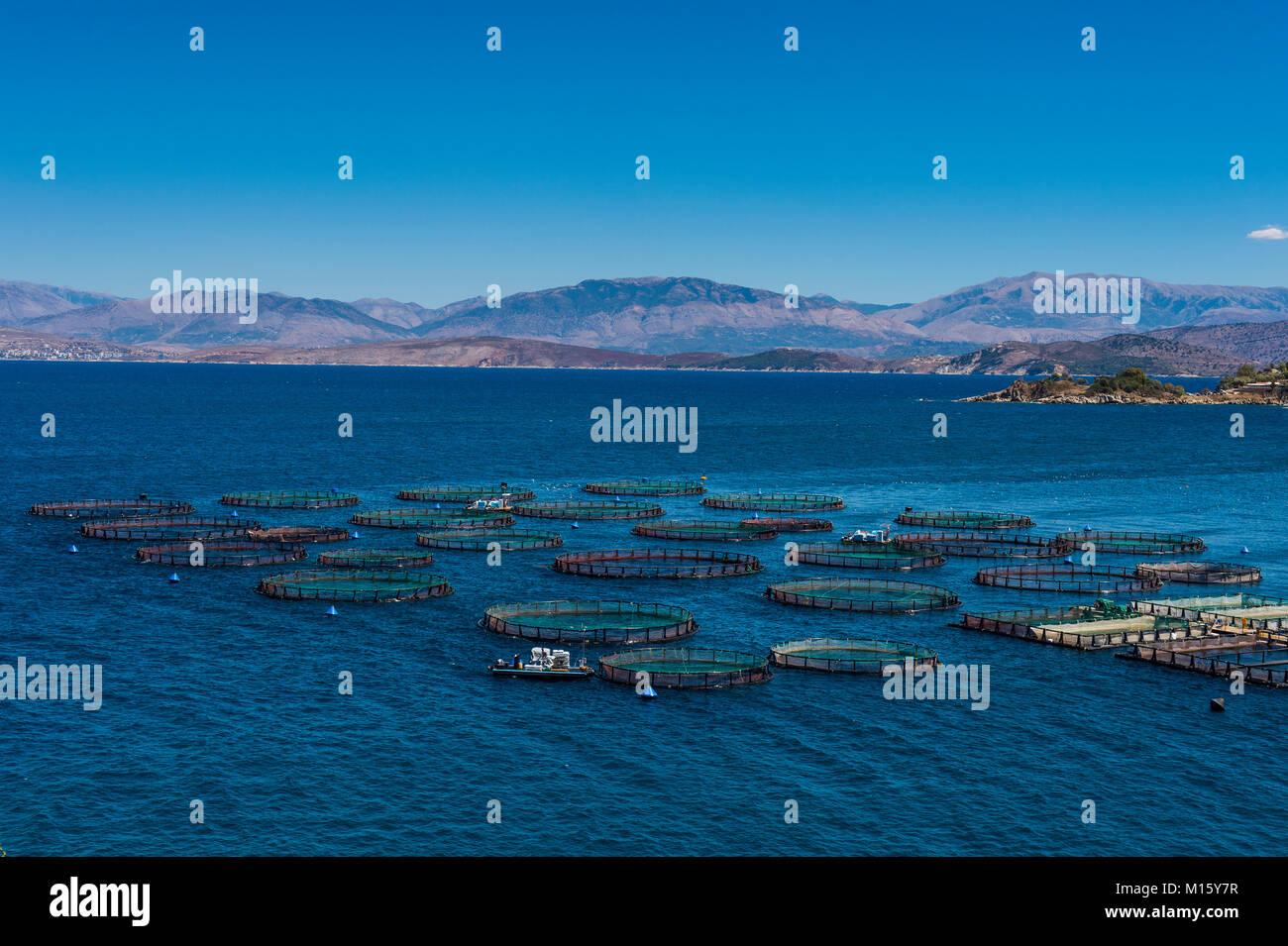 Fishfarm in Kassiopi,Corfu,Ionian Islands,Greece - Stock Image