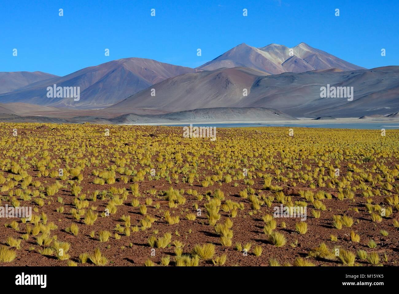 Lagune Salar de Talar mit kahlen Bergen Cerros de Incahuasi und Paso de Sica,Antofagasta Region,Chile - Stock Image