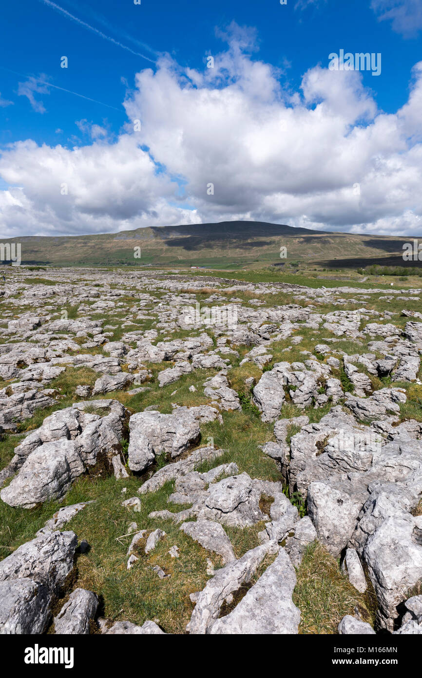 Ribblehead Quarry; NNR; Yorkshire; UK - Stock Image