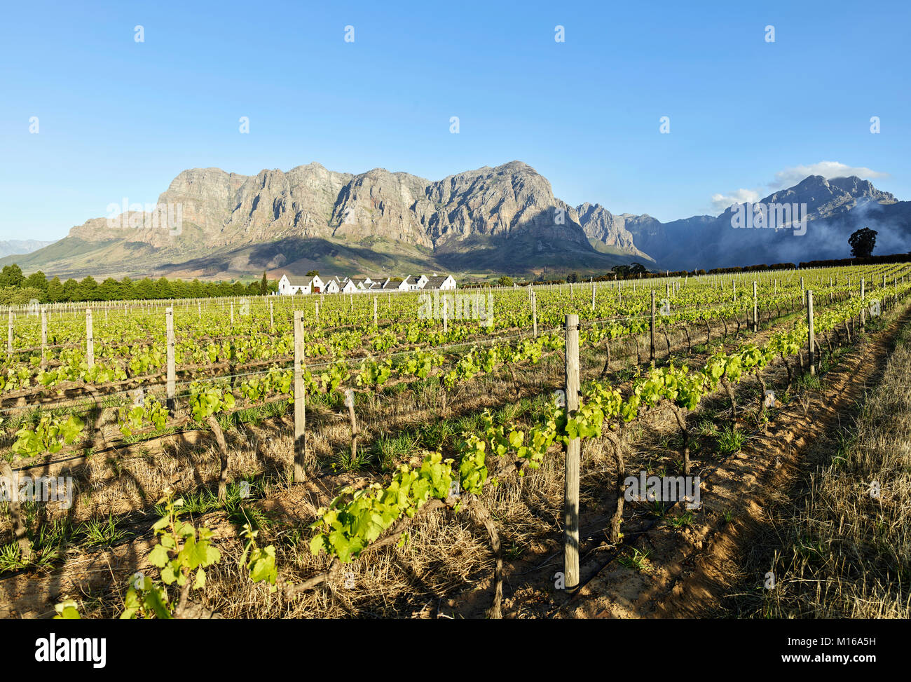 Wineries, Winegrowing, Stellenbosch, Cape Winelands, Western Cape, South Africa - Stock Image