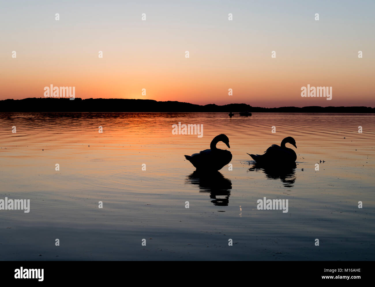 Sunset at the Chiemsee, silhouettes of two swans, near Prien, Bavaria, Germany Stock Photo