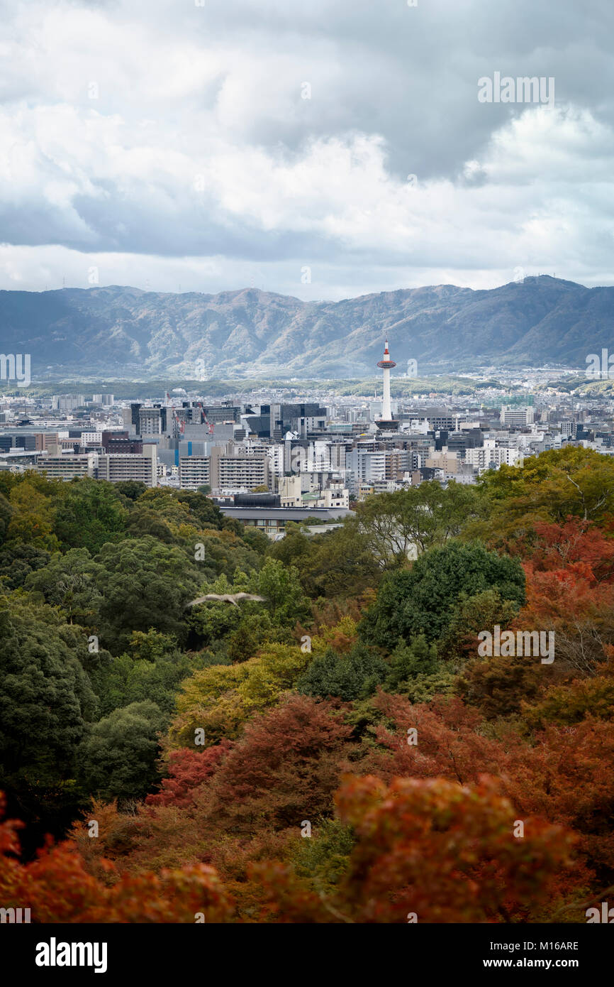 Kyoto tower and the cityscape with mountains in the background and colorful autumn trees in foreground with an eagle - Stock Image