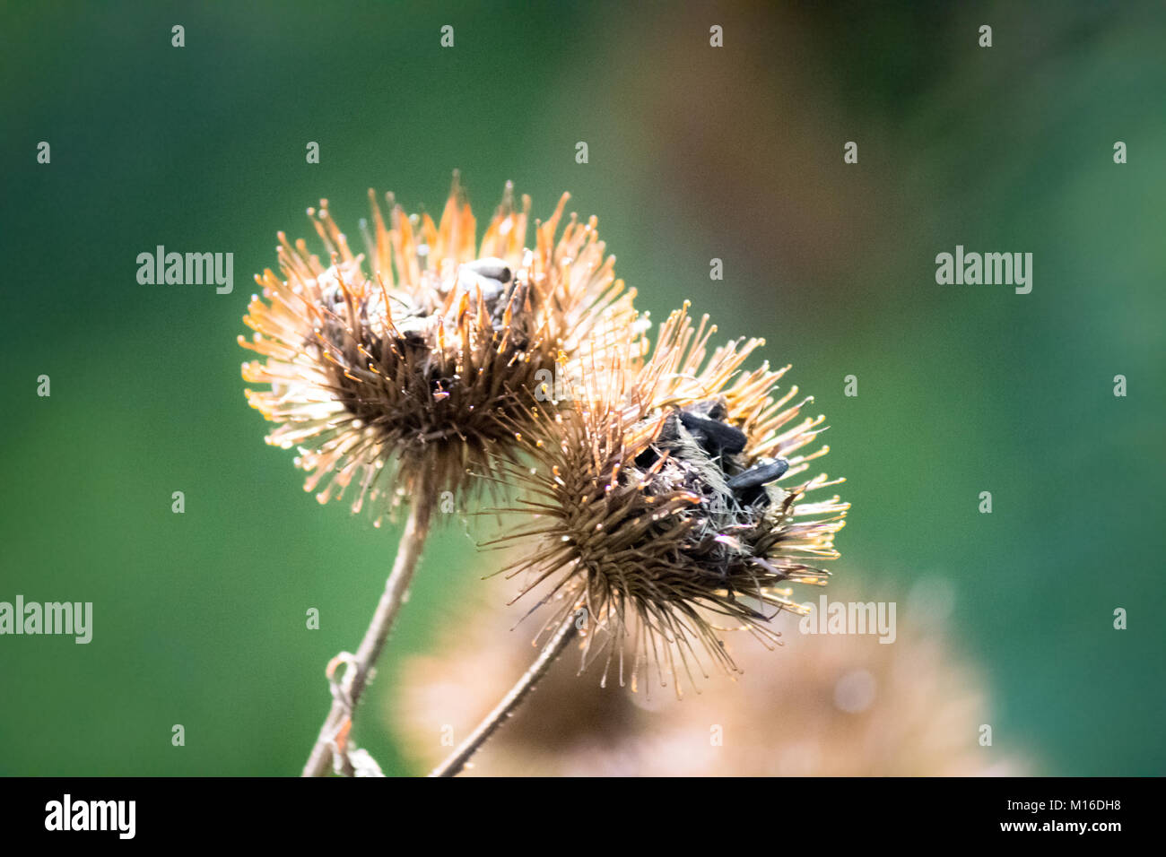 Abstract Burr - Stock Image