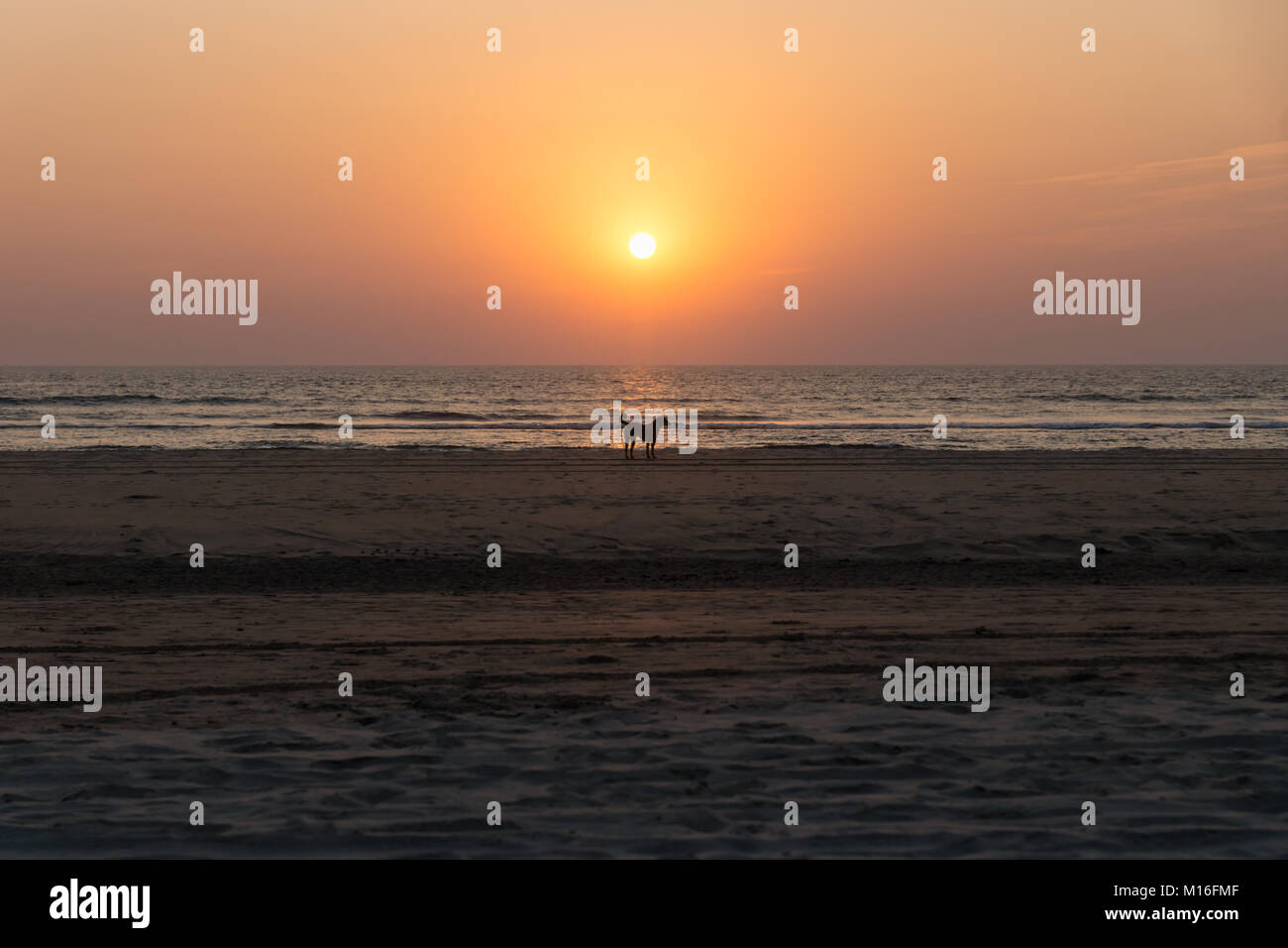 Dog at the beach of Goa during sunset, India - Stock Image