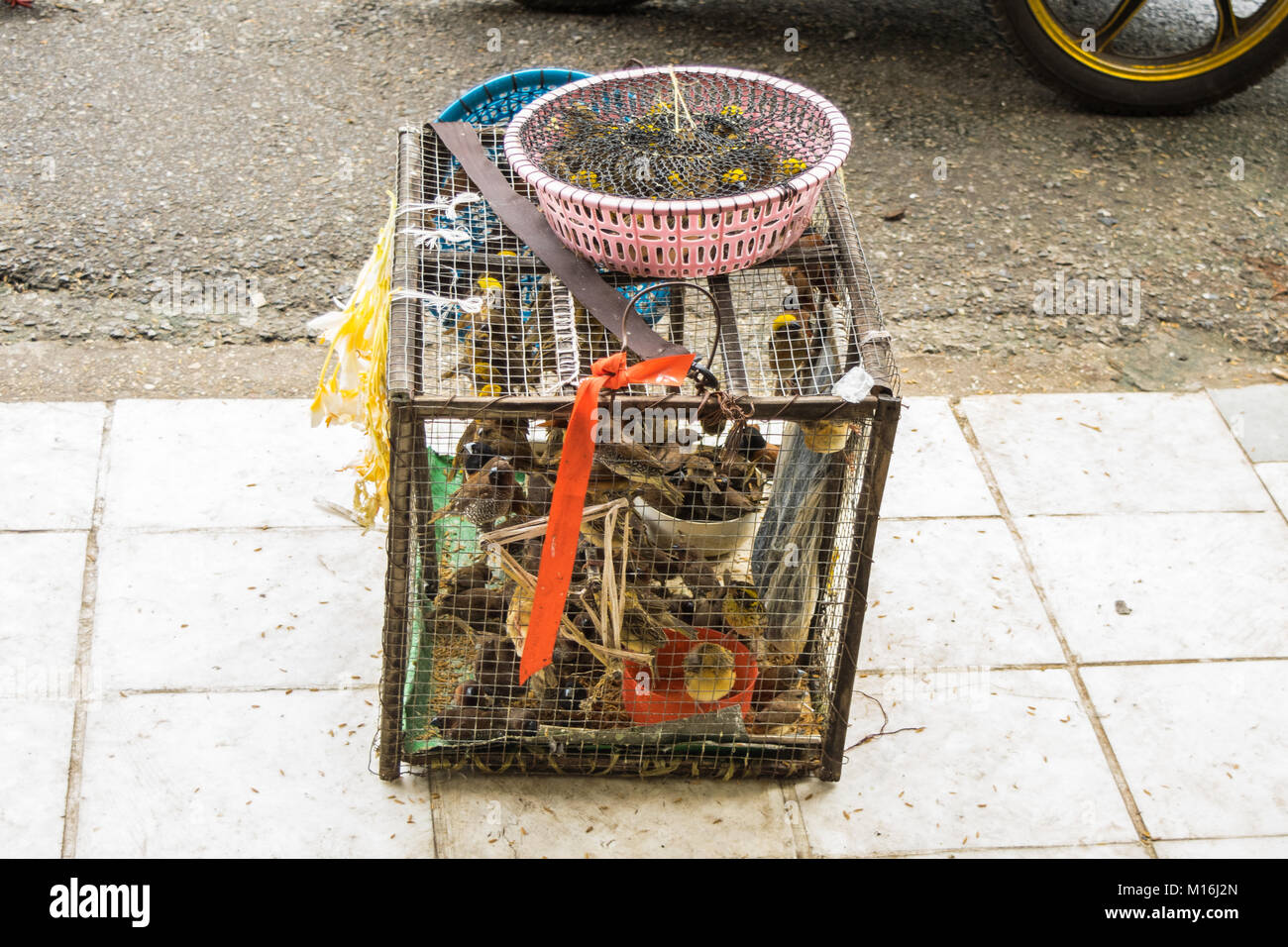A cage and container full of merit or luck birds, waiting to be released outside a Buddhist pagoda in Yangon, Myanmar. - Stock Image