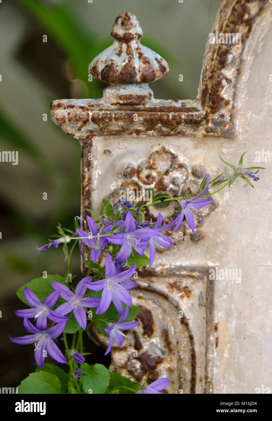 Antikes Ornament mit Glockenblume - Stock Image