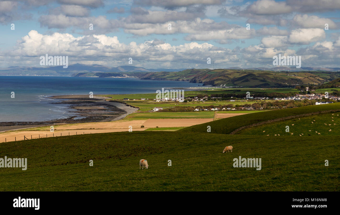 View over Cardigan Bay on the welsh coast with sheep grazing in fields - Stock Image