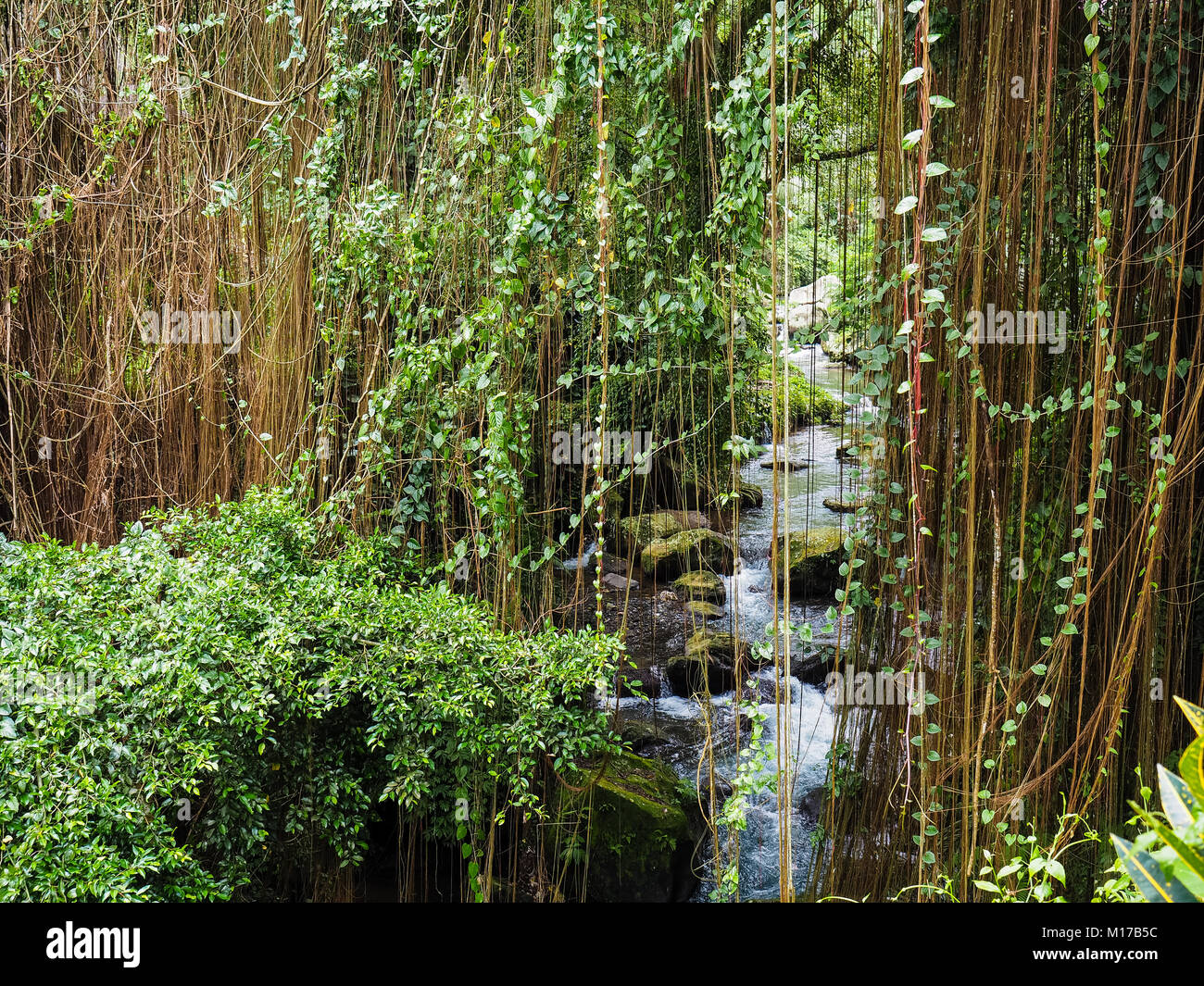 Mountain rocky river in the jungle. Exotic rainforest with fresh, clean water. tropical area - Stock Image