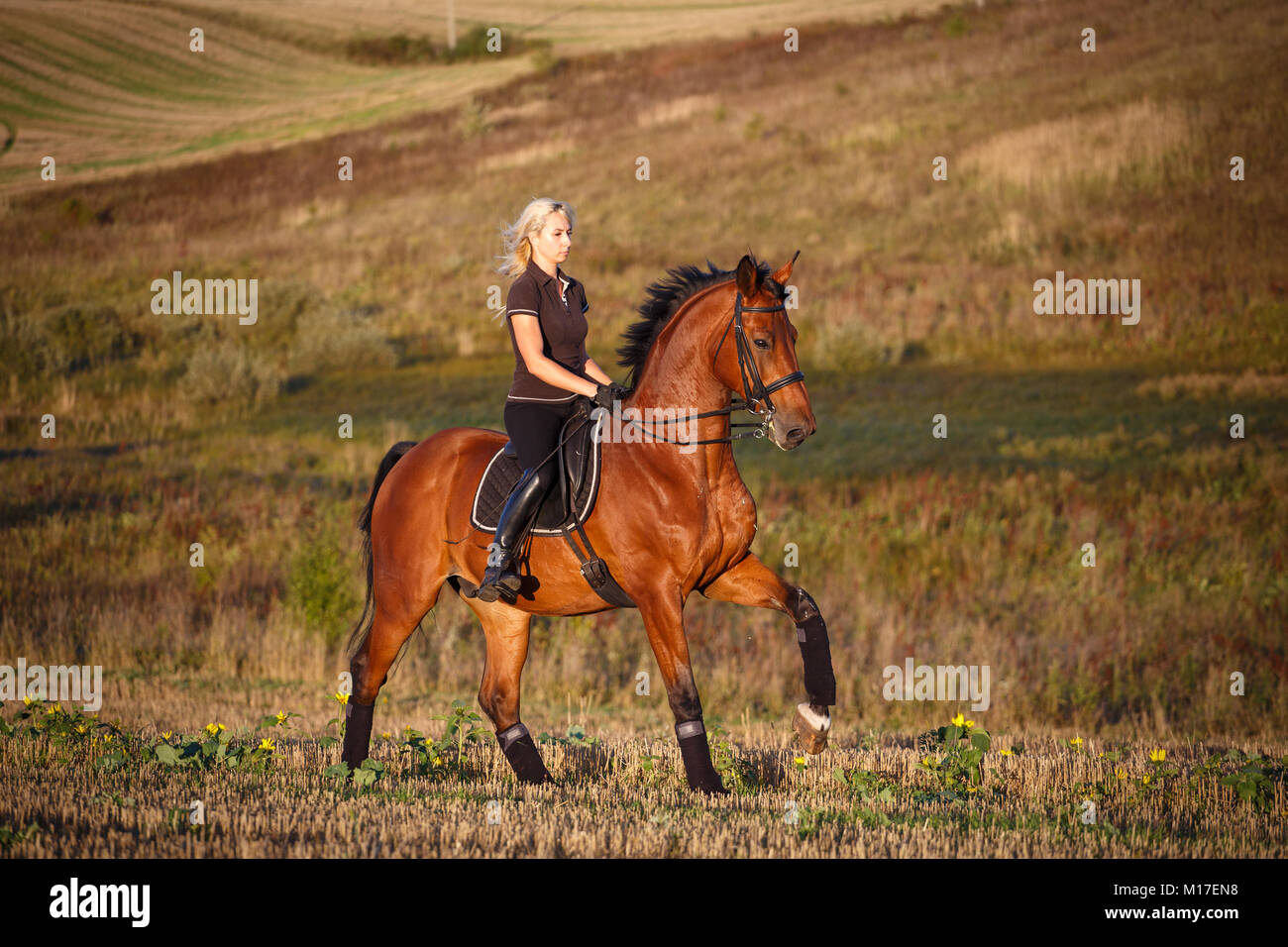 Young female rider on bay horse in field. eople and animals. Equestrian. Stock Photo