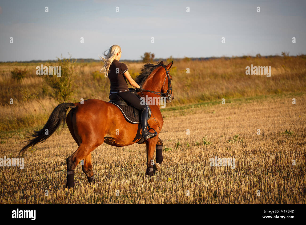 Young female rider on bay horse in field. eople and animals. Equestrian. - Stock Image