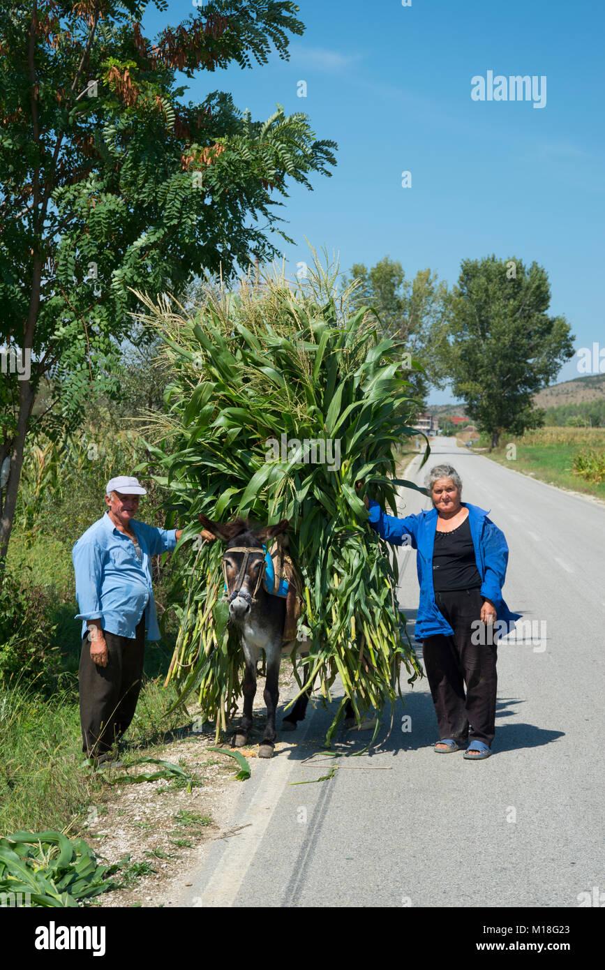 Donkey,transporting corn perennials,near Kelcyra,Albania - Stock Image