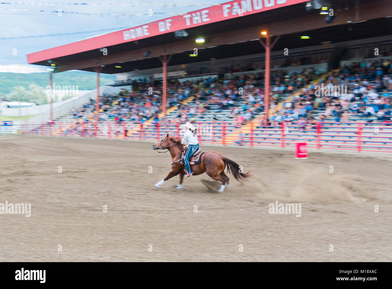Horse and rider compete in the barrel racing competition at the 90th Williams Lake Stampede, one of the largest - Stock Image