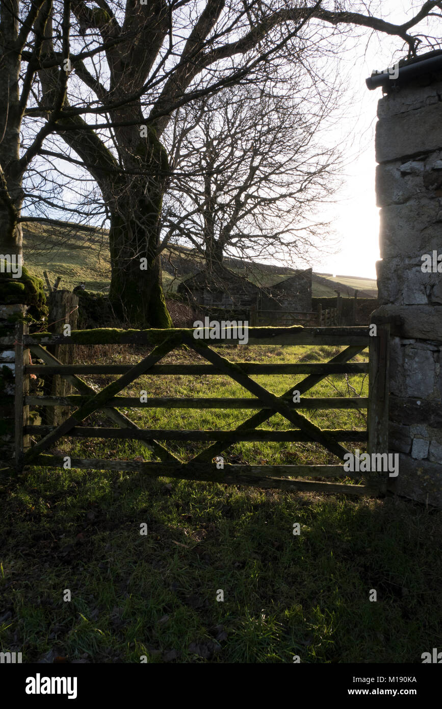 Moss covered farm gate in the low winter sun near Penyghent - Stock Image