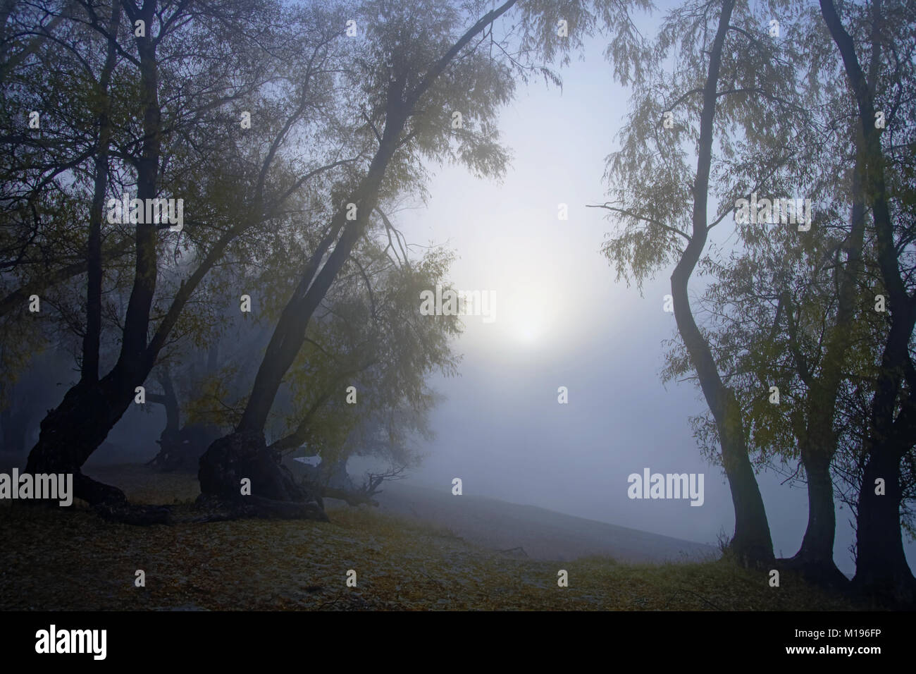 Sunrise in thick autumn fog over the river.View from the old willow forests.Silence and mysticism Stock Photo