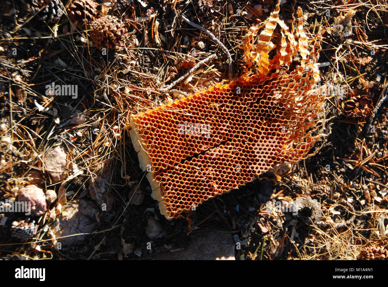 Pieces of the aircraft litter the crash site including chunks of the honeycomb material used in the stabilization - Stock Image